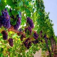 Vidalco Wines South Carolina