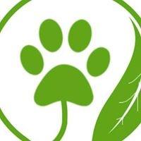 Green Dog Microbubble Pet Spa