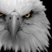Free Bird Bail Bonds