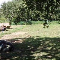 Kewstoke Youth & Community Farm