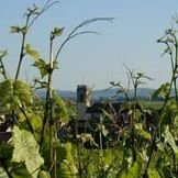 Domaine Coste Caumartin - Pommard