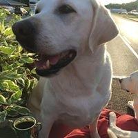 Labrador Home and Garden