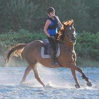 Ferme equestre de Romainville