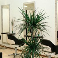 Bea's Hairstyling Lounge