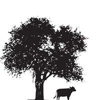 Cow & Apple