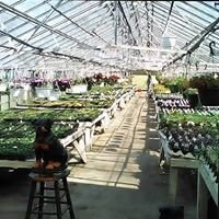 Kiko's Greenhouse