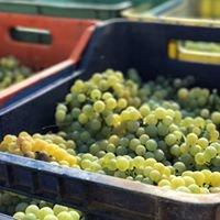 Οινοποιία Αλατά/Winery Alata