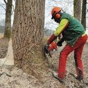 Forstbetrieb-Grothues