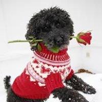 Happy Doggies Knitwear for Pets