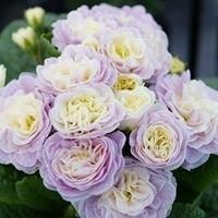 Gartenbau & Floristik Lauer