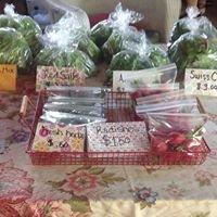 Peonies, Julie's Cut Flower Farm