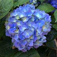 Flower Friends Garden Center