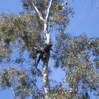 Arborvision Tree Service