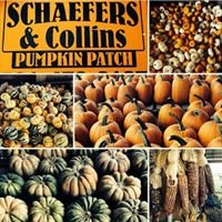 Schaefers and Collins Pumpkin Patch
