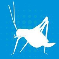 Blue Cricket Media