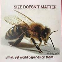 Tvrdic Honey