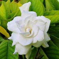 Gardenia, The Home & Garden Shop