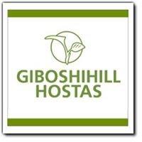Giboshihill Hostas - www.simplyhostas.ca