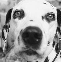 Heartland Pet Cremation