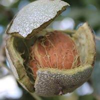 Frutos de Vettonia