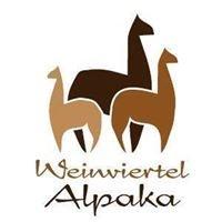 Weinviertel - Alpaka