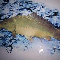Fischzucht Schaaf