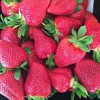 Garelja Bros Strawberry Gardens