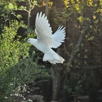 Precious Moments Dove Releases For All Occasions