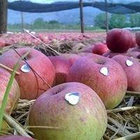 LaNostrana Fruit
