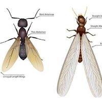 Superior Solutions Termite & Pest Control