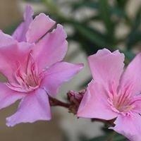 Wild Blossom Homestead