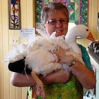 Flying Goose Quilt Shop