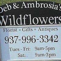 Deb & Ambrosia's Wildflowers