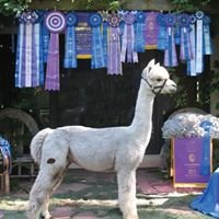 Ranch Acres Alpacas, LLC