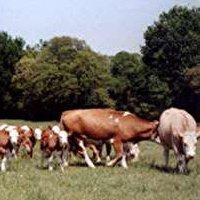 Silvermoon Cattle Company