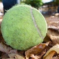 Tennis SG Dittelbrunn