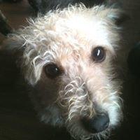 Islay Dog-Rescue
