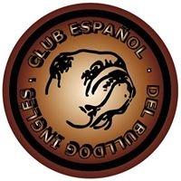 Club Español Del Bulldog Ingles CEBI