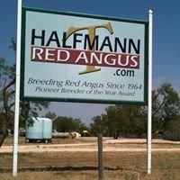 Halfmann Red Angus