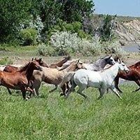 Horse Country Farm