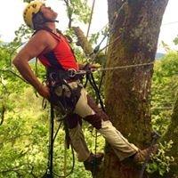 Steffen Roessle Treeservice