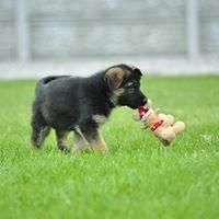 Satysfakcja German Shepherd Kennel