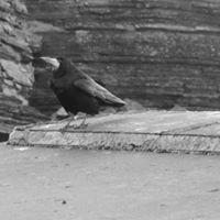 Ravens Eye Photography