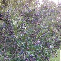 Barry's Berries
