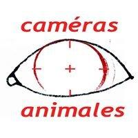 Caméras Animales