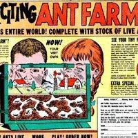 Massive Ant - Web & Graphic Design