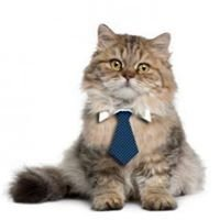 Corporate Cats Cattery Melbourne