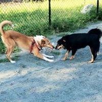 Upshur Dog Park