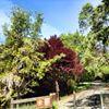 Lafayette-Moraga Trail