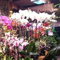 Plant Warehouse
